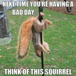 Funny-Squirrel-Meme-Next-Time-You-Are-Having-Bad-Day-Picture.jpg