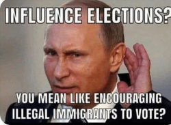 influence-elections-you-mean-like-engouraging-illegalinimigga-nts-to-vote-46415821.png